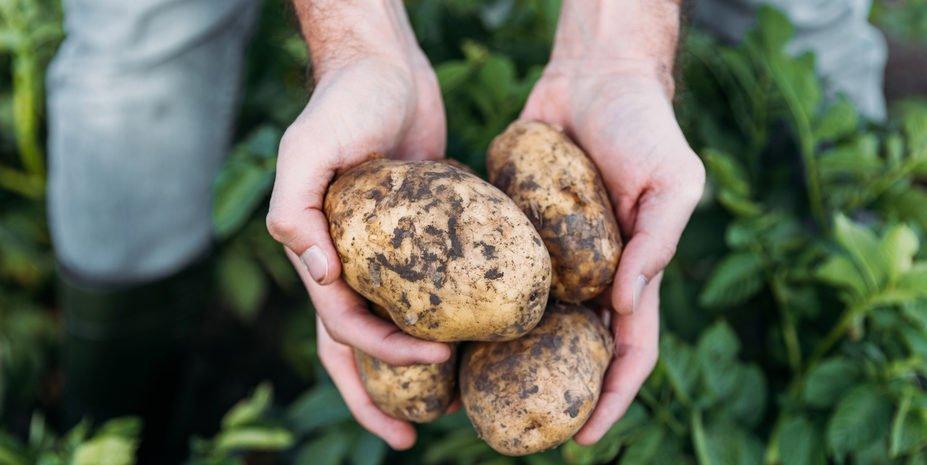 Manchmal ist es mit der Weiterbildung, wie mit der Kartoffelernte ...