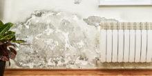 Feuchtigkeit und Schimmel hinter der Wandtapete