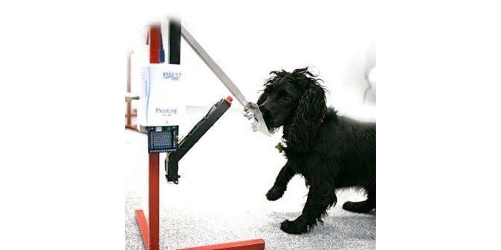 An der britischen Open University wurde ein computergestütztes Hilfsmittel für Krebssuchhunde entwickelt. Foto: Open University