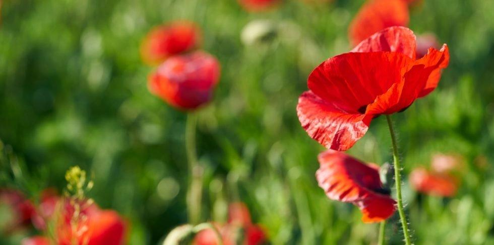 Frühjahrsputz: Auch innerlich notwendig!