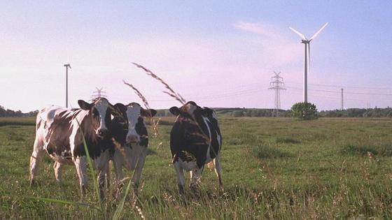 Werden Kühe in Zukunft durch Roboter betreut?