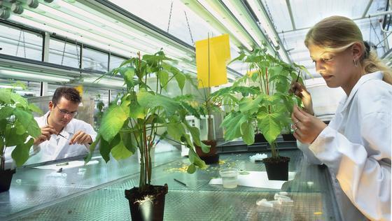 Forschung könnte Fungizide überflüssig machen.