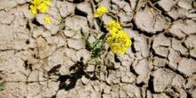 Fortschritt in der Landtechnik hilft Trockenheit und Erosion zu begegnen