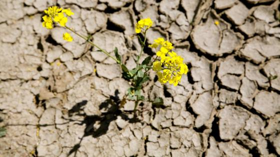 Erosion als Herausforderung.