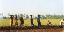 Pestizide: Hersteller schuldig gesprochen