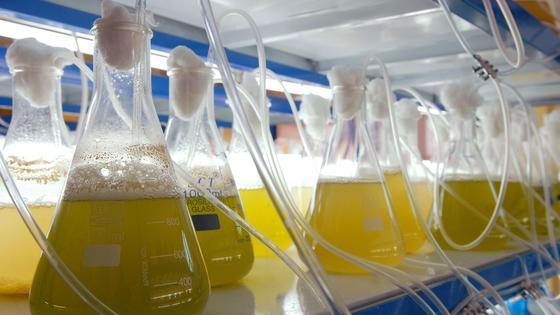 Biofuel ist im kommen.