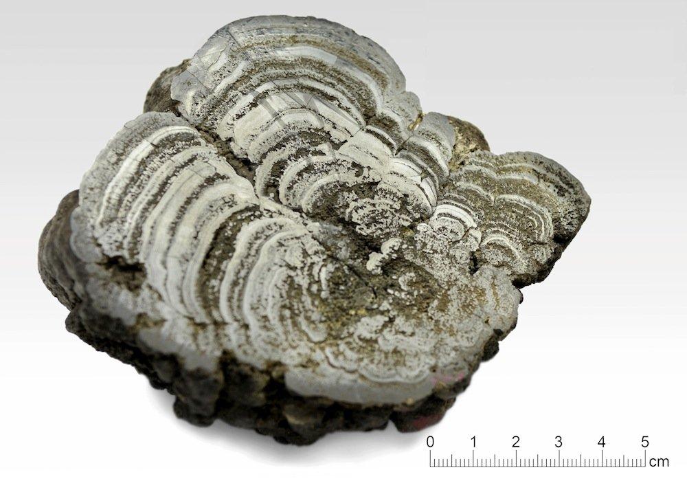 Eine durchgeschnittene Manganknolle aus dem Pazifik
