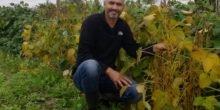 Neue Soja-Sorten vertragen besser deutsches Klima