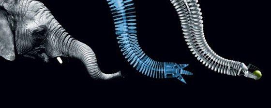 Entwicklungsingenieure schauen sich für die Bionic Techniken von der Natur ab.