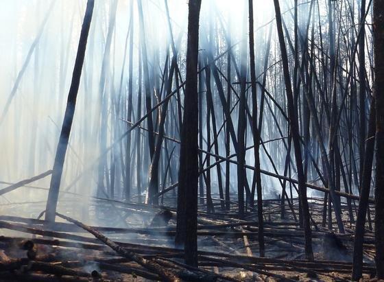 Durch Waldbrände gibt es große Einträge von Holzkohle in den Boden. Doch neue Forschungsergebnisse zeigen, dass die Holzkohle aus dem Boden herausgewaschen und über die Flüsse bis in die Ozeane getragen wird.