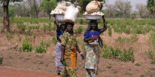 Afrika mangelt es an schwarzem, humusreichem Boden