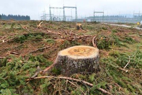 Im Thüringer Wald müssen Bäume für eine Starkstromtrasse weichen.