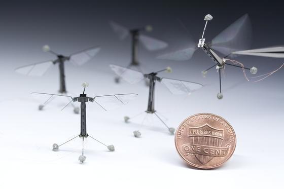 Sie fliegt wie ein Insekt: Die winzige Roboter-Biene der Harvard-Universität hebt mit 120 Flügelschlägen pro Sekunde ab.