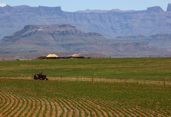 Ein Traktor fährt über einen Acker in den Drakensberg Mountains im südafrikanischen Kwa-Zulu Natal. Der Einsatz von Mineraldüngern in denTropen und Subtropen hat fatale Auswirkungen auf die Qualität der Böden und die Ernährungssicherheit ganzer Regionen. Zu diesem Schluss kommt eine Studie der Heinrich-Böll-Stiftung und der Naturschutzorganisation WWF. Die Autoren kritisieren dieSubventionierung synthetischer Düngemittel in Afrika, da die Erfolge nur kurzfristig seien.
