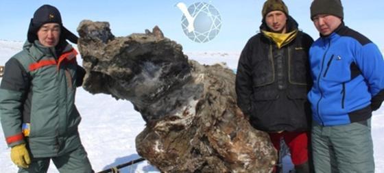 Wissenschaftler der Universität in Jakutsk haben ein ungewöhnlich gut erhaltenes Mammut auf einer sibirischen Insel des arktischen Meeres gefunden.