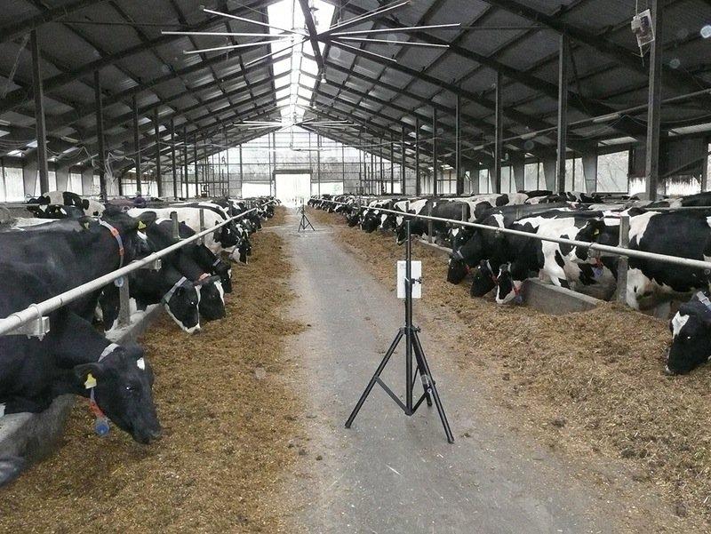 Messungen des Stallklimas in einem frei belüfteten Rinderstall.