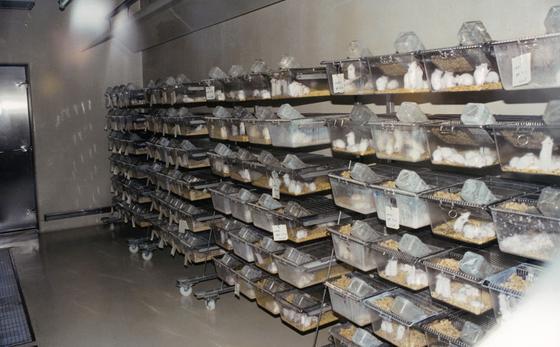 Mäuse sind die weltweit am häufigsten verwendete Tierart in Forschungslaboren. Tendenz steigend.