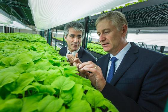 Professor Vidadi Yusibov (l.) und Professor Andre Sharon begutachten die Tabakpflanzen in der vollautomatisierten Pflanzenfabrik im amerikanischen Newark.
