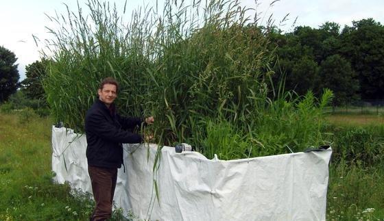 Dr. Ingo Dobner kontrolliert die Bepflanzung der neuartigen Filterversuchsanlage, mit der Arzneimittelreste in Kleinkläranlagen abgebaut werden sollen.