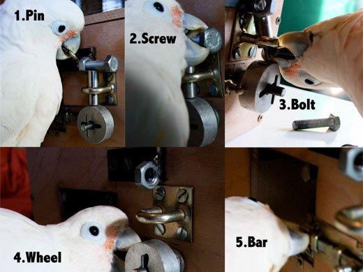 Die fünf Schritte zum Erfolg: 1. den Pin an dem oberen Ring packen und nach oben ziehen; 2. die Schraube mit 25-30 aufeinanderfolgenden Auf- und Abbewegungen des Schnabels oder des Fußes aufschrauben; 3. den Schnabel unter den Bolzen stecken und ihn durch den Befestigungsring drücken; 4. das Rad 90 Grad drehen und es dann auf den Körper zu durch den T-Balken ziehen; 5. den Riegel durch die Schlaufe drücken.