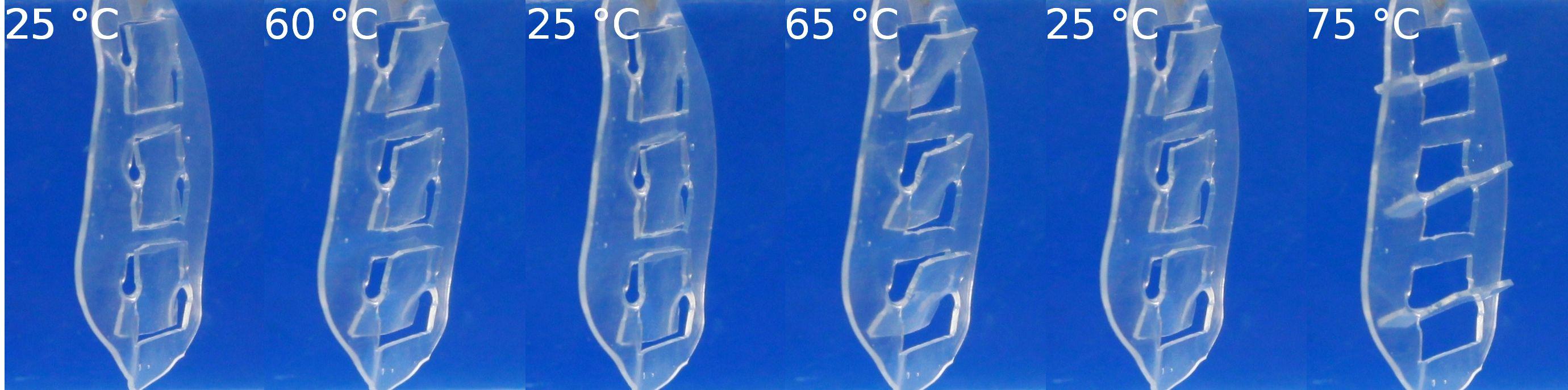 In dem Modell einer Fensterjalousie werden die Polymer-Aktuatoren zum temperaturabhängigen Öffnen und Schließen der Lamellen genutzt.