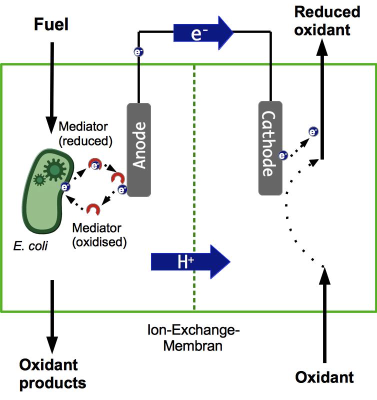 Prinzip einer MFC-Biobatterie.