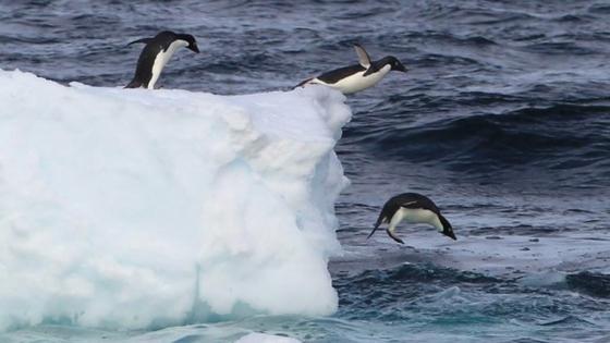 Pinguine in der Antarktis: Die Verhandlungen über die Meeresschutzgebiete am Südpol sind gescheitert.