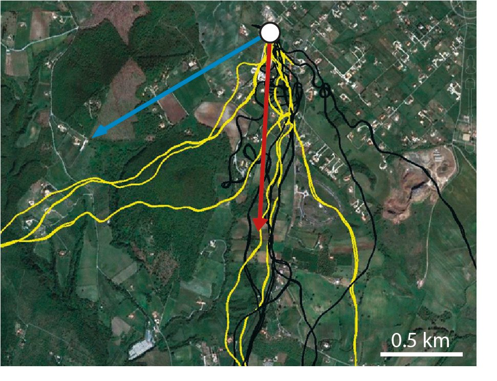 Flugrouten: Der blaue Pfeil zeigt die Richtung zum Futterschlag an, der rote die Richtung zum Heimschlag. Der weisse Punkt ist der Auflassort. Gelb markiert sind die Flugrouten der hungrigen Tauben, schwarz jene der gefütterten Tauben.