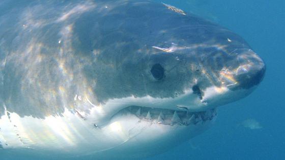 Spezielle Muster auf Neopren-Anzügen sollen künftig Taucher und Surfer vor Hai-Angriffen bewahren.