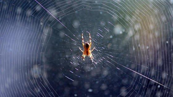 Spinne zum Vorbild: Britische Forscher arbeiten an einemElektrospinnverfahren, mit dem auf lange Sicht Körperorgane produziert werden könnten. Nahziel ist es, beschädigte Körperteile im menschlichen Körper zu reparieren. Bei dem Verfahren haben sich die Forscher daran orientiert, wie Spinnen ihr Netz produzieren.