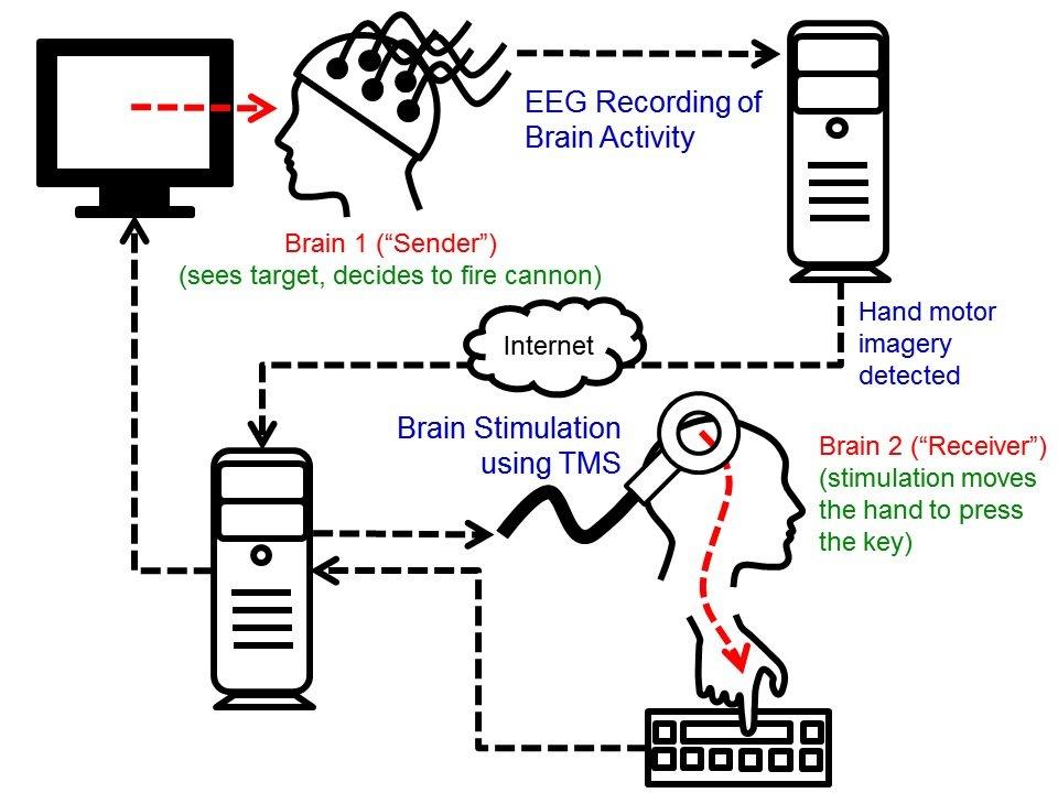 Der Aufbau des Experimentes: Hirnsignale vom Sender werden aufgenommen und übers Internet weitergeleitet, sobald der Computer eine Handbewegung erkennt. Das Kommando führt zur magnetischen Stimulanz einer bestimmten Region im Gehirn des Empfängers, der die gedachte Bewegung mit seinem Finger ausführt.