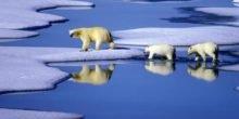 Klimarat erwartet starken Anstieg des Meeresspiegels