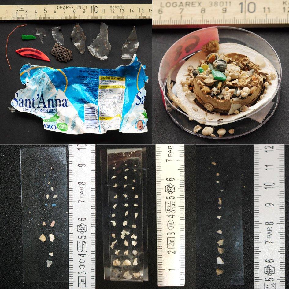 Über die Nahrungskette gelangen die kleinen Plastikmüll-Teilchen aus dem Gardasee bis in den menschlichen Magen.