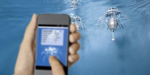 Quallen gehören zu den effizientesten Schwimmern im Meer