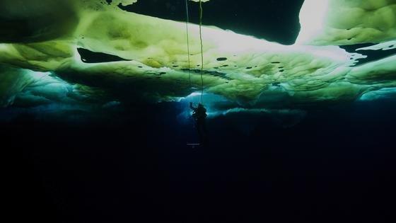 Eingeschlossene Algen färben das Meereis, das wiederrum Licht bricht und filtert. Taucher entdeckten Schwärme jungen Krills tagsüber vor allem dort, wo übereinander geschobene Eisstücke Höhlen und Spalten bildeten.