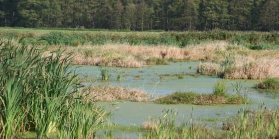 Vor zwei Jahren war dasMoor Polder Kieve noch für die Landwirtschaftsnutzung trockengelegt. Heute ist es wiedervernässt, CO2-neutral und bietet neuen Lebensraum für bedrohte Tierarten. Ein einzelnes Zertifikat zur Aufrechterhaltung des Projektes kostet 35 Euro.