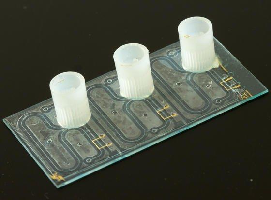 Die Kanäle auf dem Chip sind mit Trägerflüssigkeit gefüllt. Drückt man eine Bodenprobe hinein, wandern Ionen durch ein elektrisches Feld. Anhand verschiedener Geschwindigkeiten kann man unterschiedliche Nährstoffe identifizieren.