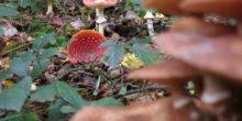 Pilze helfen Bäumen bei Stress und an schwierigen Standorten