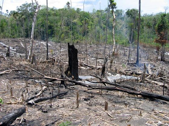 Der Wald brennt in der Nähe des geschützten Nationalparks von Peten in Guatemala: In den vergangenen zwölf Jahren hat sich die weltweite Waldfläche weiter verringert.