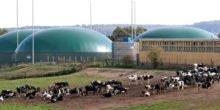 Gülle wird zu Biogas und umweltschonendem Dünger