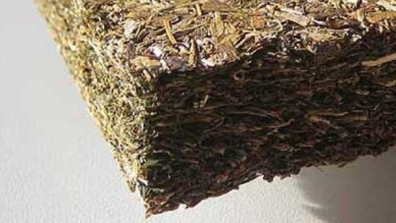 Seegras eignet sich gut als Dämmmaterial. Fraunhofer Forscher haben ein Verfahren entwickelt, wie der Rohstoff ohne chemische Zusätze weiterverarbeitet werden kann.