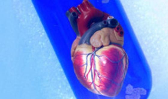 Zukunftsvision- Herzgewebe aus dem Labor.