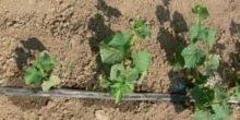 Landwirtschaft: Ende der Wasserverschwendung in Sicht