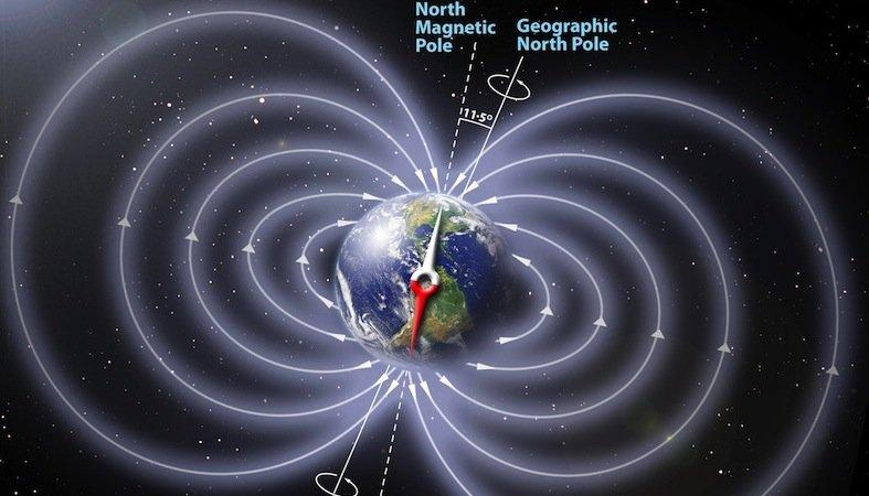 Die Monarchfalter messen den Winkel zwischen Magnetfeldlinien und Erde und können sich so auf ihren Wanderflügen orientieren.