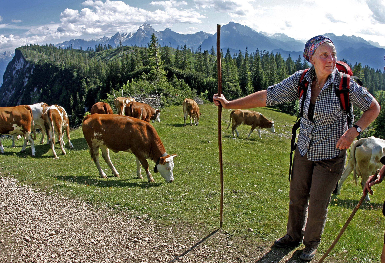 Almabtrieb in den bayerischen Alpen: Biologisch arbeitende landwirtschaftliche Betriebe müssen auch zusätzliche Lebensräume schaffen, um die Artenvielfalt zu fördern.