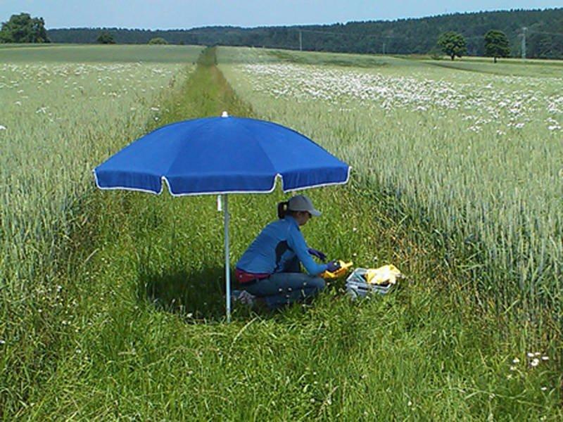 Eine Wissenschaftlerin sammelt Regenwürmer im Grasstreifen zwischen zwei Feldern.