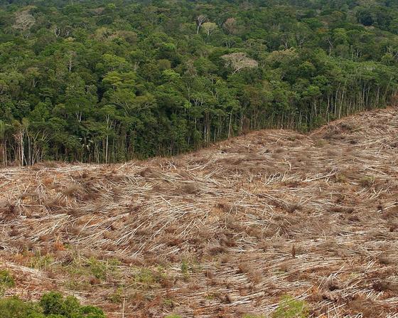 Indonesien verwandelt immer größere Regenwaldflächen in Palmölplantagen. Bis zum Jahr 2025 will das Land die Plantagenfläche von derzeit zehn auf 26 Millionen Hektar vergrößern.
