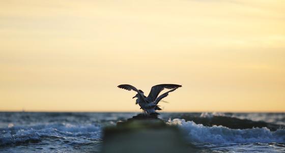 Plastik, das auf der Wasseroberfläche schwimmt, ist für viele Tierarten verheerend. Sie halten es für Nahrung und sterben. Welche Folgen Plastik auf dem Meeresboden für die Tierwelt hat, ist bislang unklar.