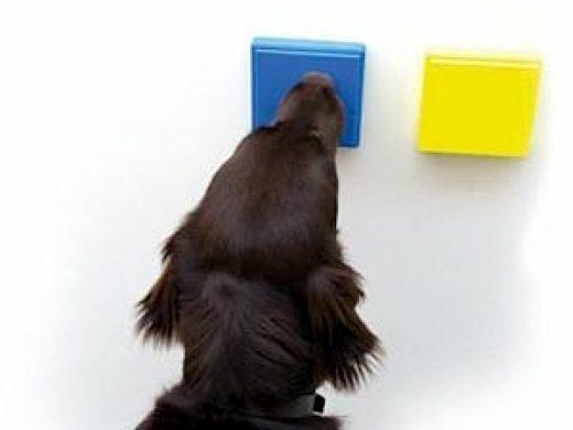 Hundegerechte Schalter: Am ACI wird daran gearbeitet, das Zusammenspiel von Hunden und Technik zu optimieren.