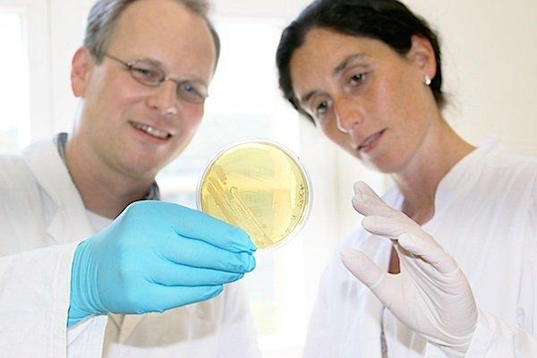 Professor Christoph Wittmann und seine Mitarbeiterin, Judith Becker, untersuchen einen Mikroorganismus, der an der Fermentation der Kakaobohnen beteiligt ist.
